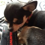 Chihuahua and Cineworld unlimited card