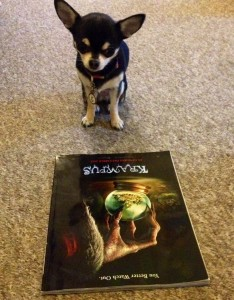 Chihuahua and poster for Krampus