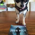 Chihuahua and John Wick Poster