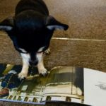 Chihuahua with Orient express brochure