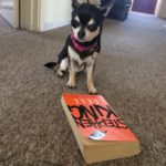 Chihuahua and Stephen King's book Cell