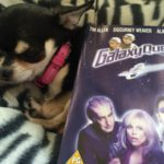 Chihuahua with Galaxy Quest DVD