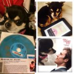 Chihuahua promoting Me Before You