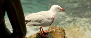 Seagull from The Shallows