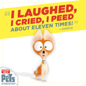chico the chihuahua from Secret life of pets