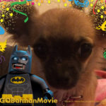 Chihuahua with Lego Batman