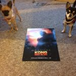 The BMAF chihuahua's and Kong Skull Island Poster