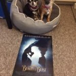 Chihuahuas with poster for Beauty and the beast