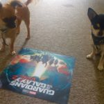 Chihuahuas with Guardians of the galaxy poster