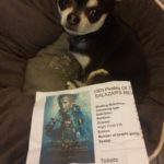 Chihuahua with our Pirates 5 ticket