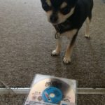 Chihuahua with Jack Reacher 2 on BluRay