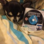 Chihuahua with Rental copy of Patriots Day