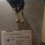 Chihuahua with The Snowman cinema ticket