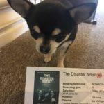 Chihuahua with Cinema ticket