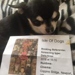 Chihuahua with Isle of Dogs Cinema Ticket