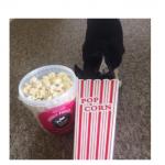 Chihuahua in Popcorn Carton