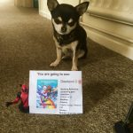 Chihuahua with Cinema ticket for Deadpool 2