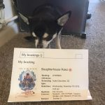 hihuahua with Cinema Ticket for Slaughterhouse Rulez
