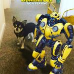Chihuahua with Bumblebee the Transformer