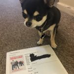 chihuahua with ticket to see Fighting With my Family